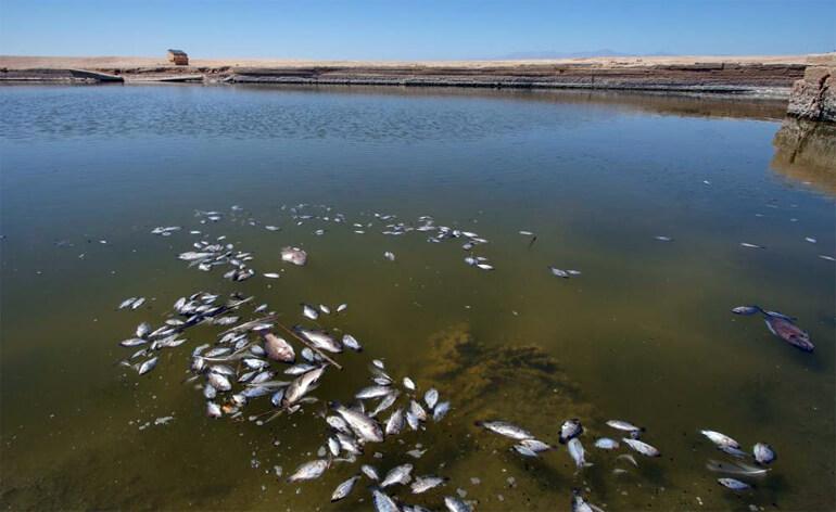 мертвая рыба отравленная щелочью